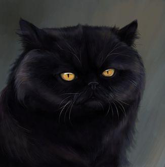 Фото Желтоглазый черный кот, by SiiroiToriorika