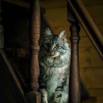 Фото Кошка сидит на лестнице