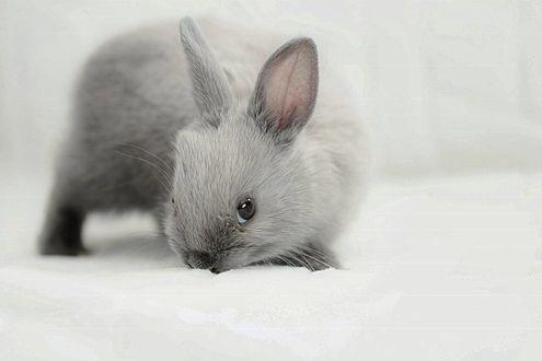 Фото Серо - белый милый кролик на снегу