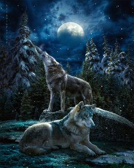 Фото Волк на земле и на камне на фоне облачного неба с луной, by IgnisFatuusII