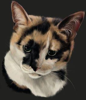 Фото Трехцветная кошка, by SiiroiToriorika