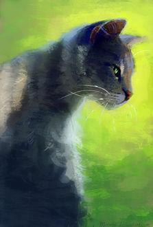 Фото Серый кот на зеленом фоне, by Meorow