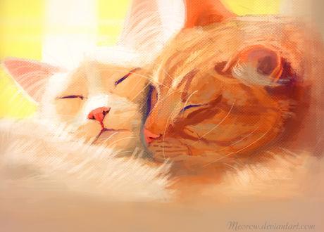 Фото Две кошки спят, прижавшись друг к другу, by Meorow