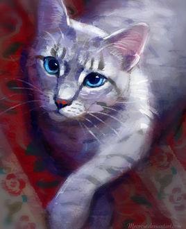 Фото Серая кошка с голубыми глазами, by Meorow