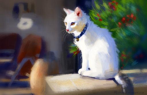 Фото Белая кошка сидит на столе, by Meorow