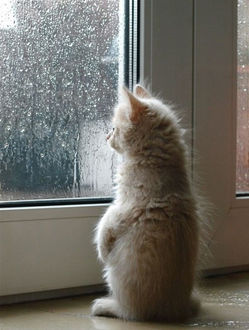 Фото Котенок сидит у окна и наблюдает за дождем за стеклом