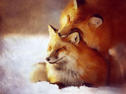 Фото Две лисички в снегу, by SheWolfsteampunk