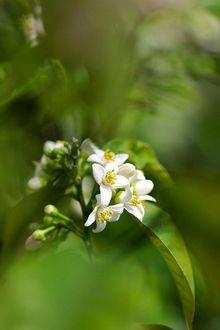 Фото Белые цветы на размытом фоне
