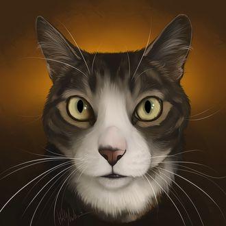 Фото Бело-серая кошка на оранжевом фоне, by Bear-hybrid