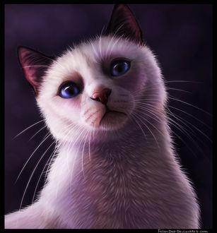Фото Голубоглазая белая кошка с черными ушками, by FelonDog