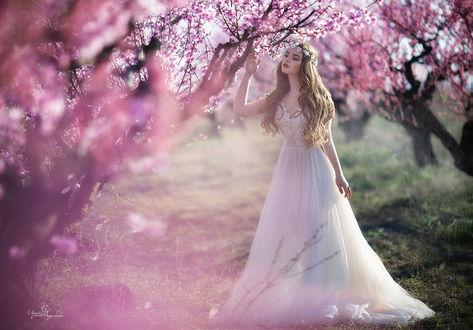 Фото Девушка-невеста стоит посреди весенних деревьев, фотограф Irina Nedyalkova