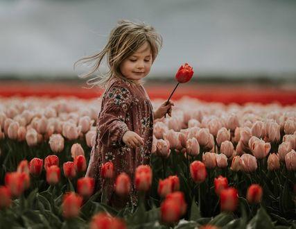 Фото Девочка стоит в поле с тюльпанами