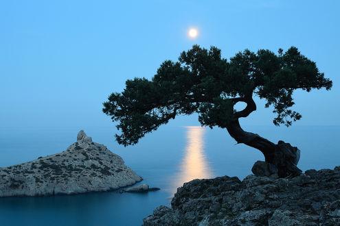 Фото Дерево на скале, на фоне лунной дорожке в море, фотограф Антон Горлин