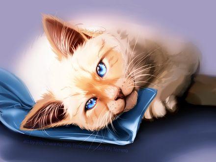 Фото Голубоглазая белая кошка на голубом покрывале, by TemeroHimitaki
