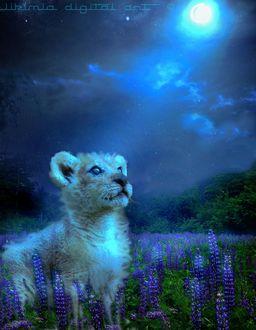 Фото Львенок среди люпинов лунной ночью, by WikiMia