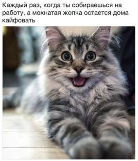 Фото Черно-белая улыбающаяся кошка (Каждый раз, когда ты собираешься на работу, а мохнатая жопка остается дома кайфовать)