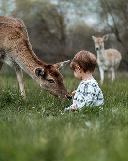 Фото Ребенок сидит в траве рядом с олененком, фотограф Adrian C. Murray
