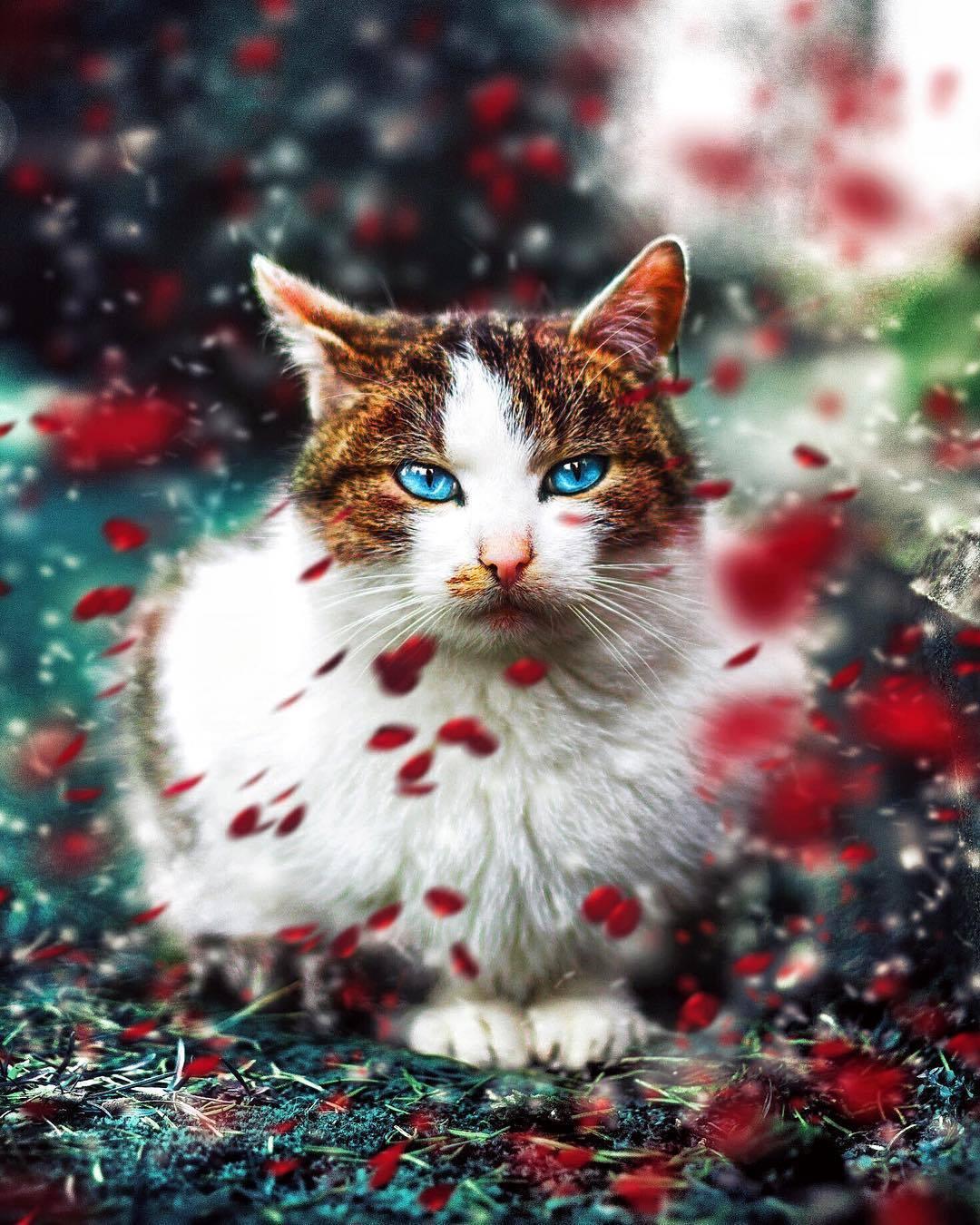 Фото Голубоглазая кошка под падающей листвой, by Kacper Piasecki