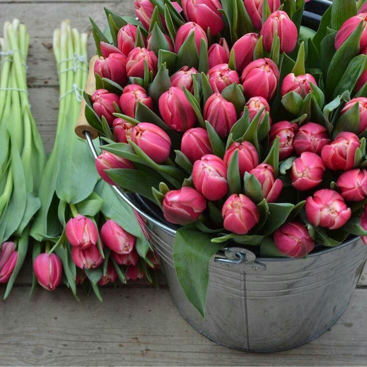 тюльпаны в ведре фото день, любое время