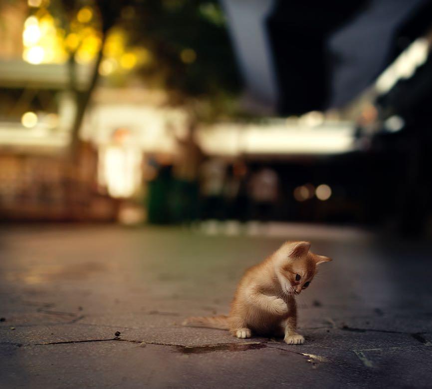 Фото Рыжий котенок, приподняв лапку, сидит на ночной улице, by selinisit