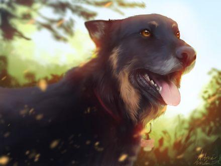 Фото Черный пес с открытой пастью и высунутым языком, by Snowbula