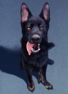 Фото Черный пес с открытой пастью с высунутым языком, by awkwaard