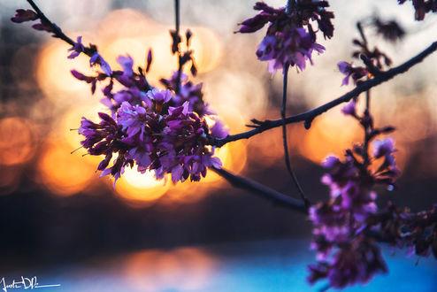 Фото Весенние цветущие веточки на фоне бликов, by JustinDeRosa