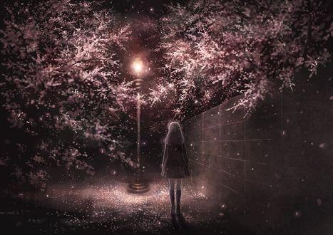Фото Девушка стоит у ночного фонаря на улице с весенними деревьями, by kazami395