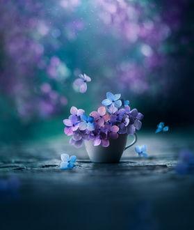 Фото Чашка с цветами гортензии, фотограф Ashraful Arefin