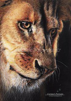 Фото Lion / Лев, by Sadness40