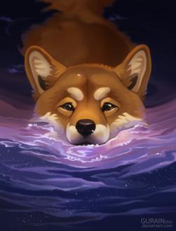 Фото Собака породы Сиба-ину в воде, by gurain
