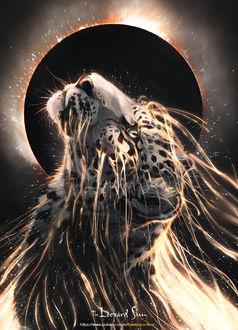 Фото Леопард солнца и луны, by balaa
