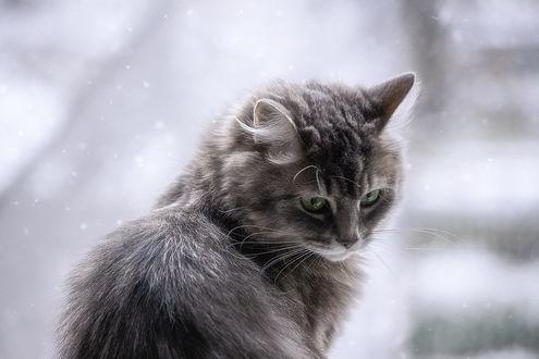 Фото Грустный котик, by Daykiney