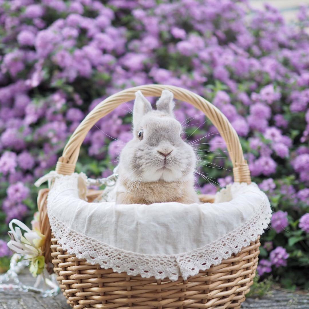 Фото Кролик в корзине на фоне куста сиреневых цветов, by nao_0307_
