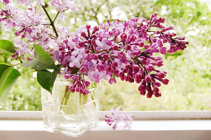 Фото Сирень в стакане на окне, by rosaarvensis