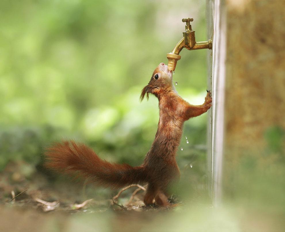 Фото Белка пьет воду из крана