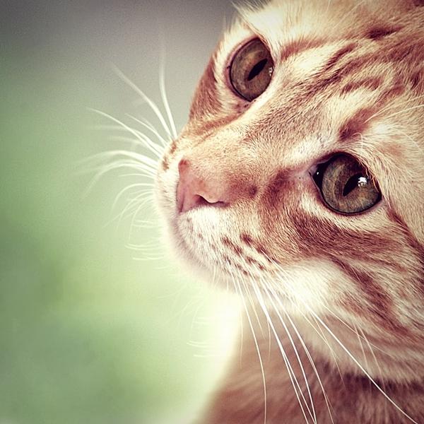 Кот скучает открытка, пасху