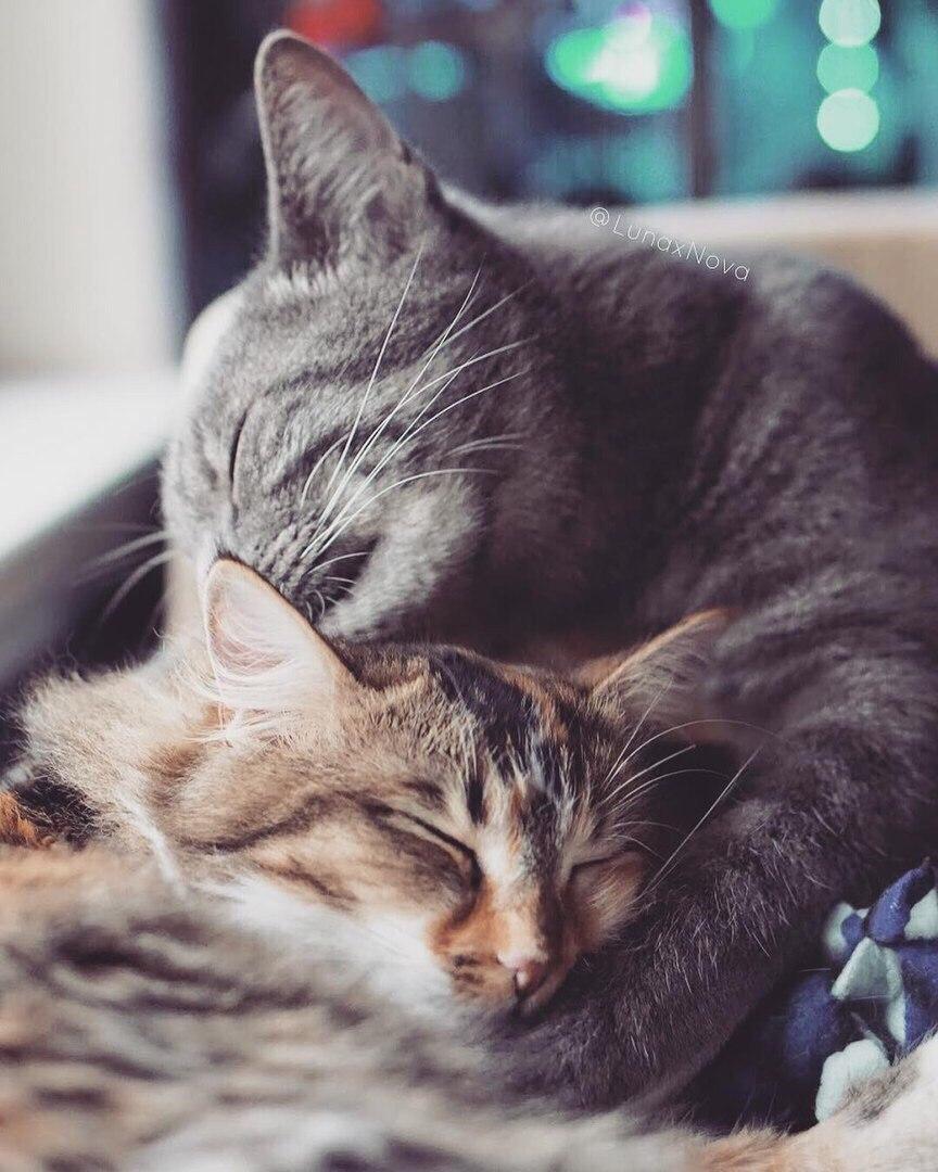 котята спят в обнимку фото имеют как стационарные