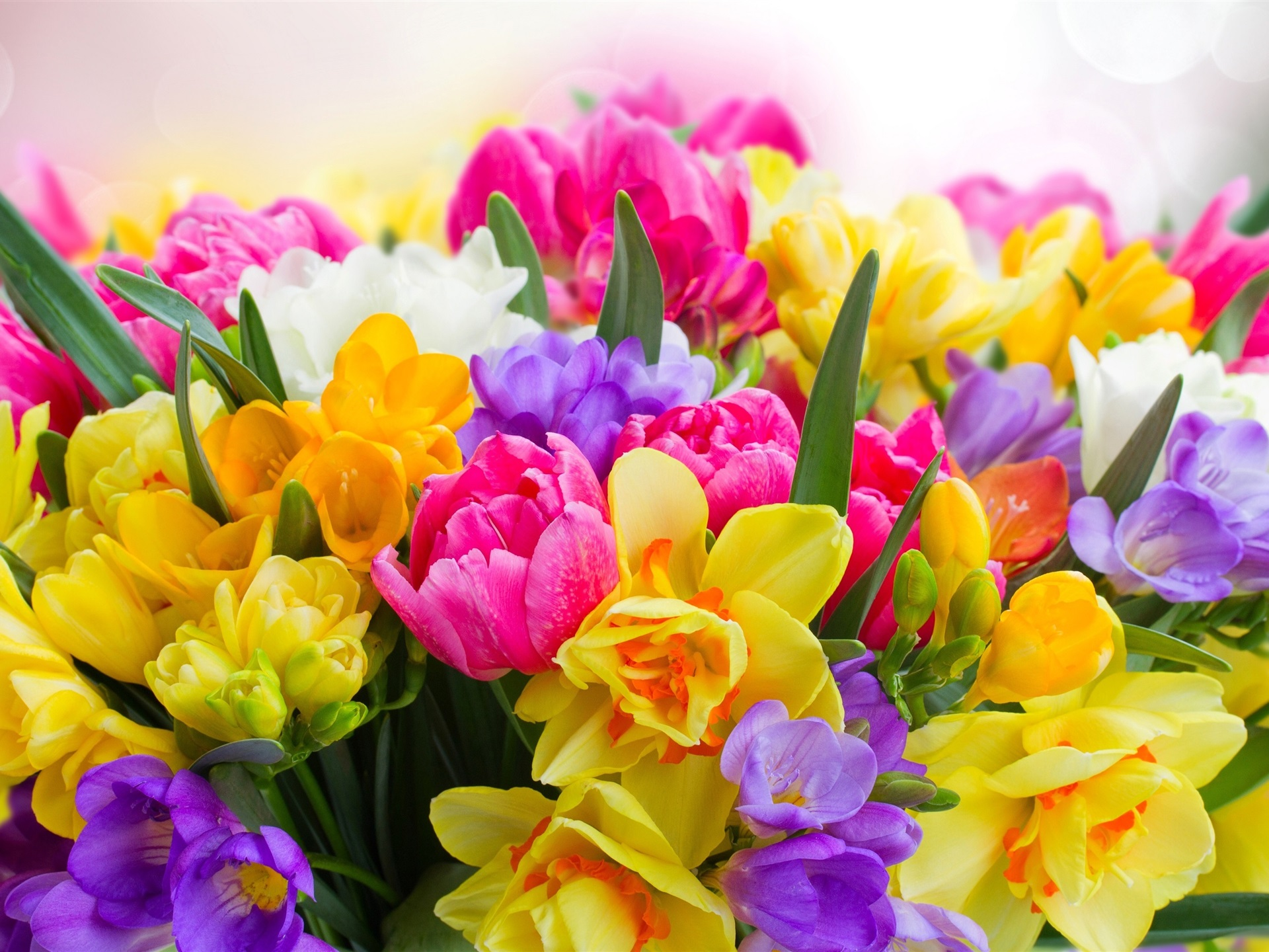 Картинки по запросу весна цветы