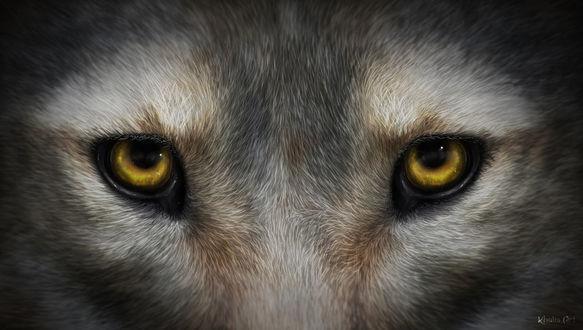 Фото Морда волка с желтыми глазами, by KhaliaArt