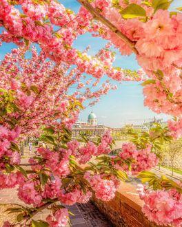 Фото Цветущие весенние веточки дерева на фоне города, Будапешт, фотограф Hegyi Benjamin