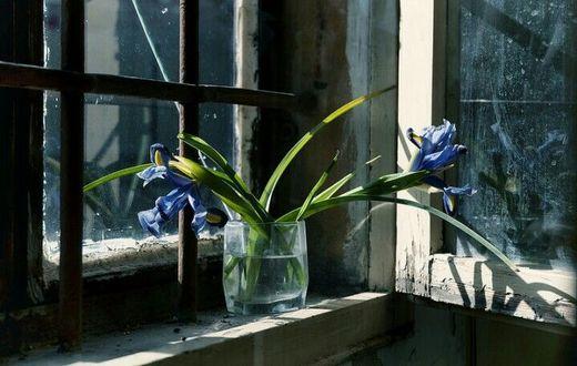 Фото Голубые ирисы в стакане с водой на старом окне, by Elisabetta