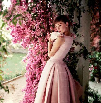 Фото Актриса Audrey Hepburn / Одри Хепберн у весеннего цветущего куста