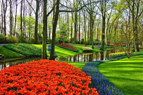 Фото Королевский парк цветов Keukenhof / Кекенхоф Netherlands / Нидерланды