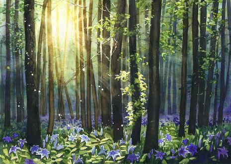 Фото Лучи солнца, проникающие сквозь деревья, освещают поляну цветов, by JoaRosa