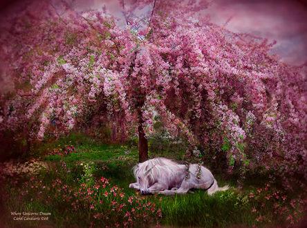 Фото Единорог лежит на зеленой траве под весенним цветущим деревом, by Carol Cavalaris