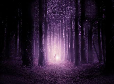 Фото Человек в лиловом лесу