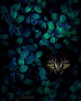 Фото Морда кошки в кустах, by Ismael J. S