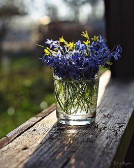 Фото Просуренки в стакане с водой на окне, by tatakytina