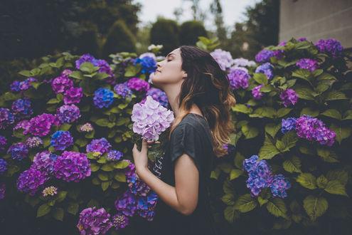 Фото Девушка стоит у цветущей гортензии, by vampire-zombie
